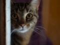 Cats-Corner-Katzenhotel-Katzen-Besucher-01