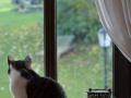 Cats-Corner-Katzenhotel-Katzen-Besucher-02
