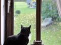 Cats-Corner-Katzenhotel-Katzen-Besucher-03