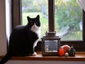 Cats-Corner-Katzenhotel-Katzen-Besucher-04