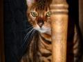 Cats-Corner-Katzenhotel-Katzen-Besucher-05
