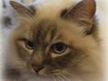 Cats-Corner-Katzenhotel-Katzen-Besucher-07