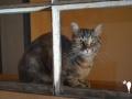 catscornerkatzenhotel_0002