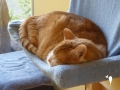 catscornerkatzenhotel_0004