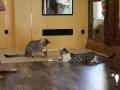 catscornerkatzenhotel_0005