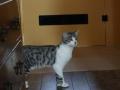 catscornerkatzenhotel_0006