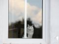 catscornerkatzenhotel_0013