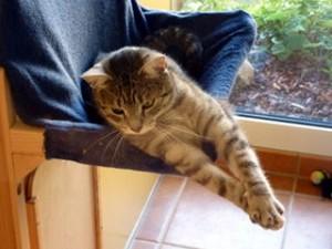 CatsCornerKatzenhotel_Eloy_entspannt
